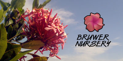 Bruwer Nursery