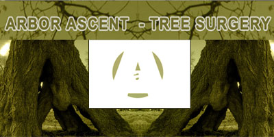 Arbor Ascent Tree Surgery