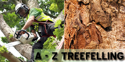 A-Z Tree Felling eastrand