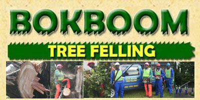 bokboom treefelling  eastrand