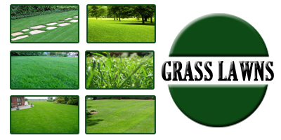Grass Lawns