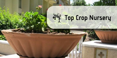 Top Crop Nursery