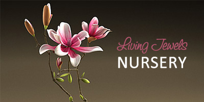 LIVING JEWELS NURSERY