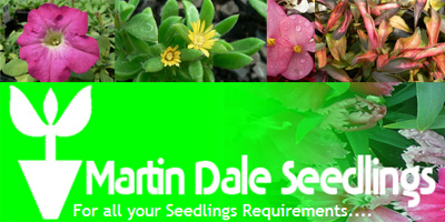 Martin Dale seedlings