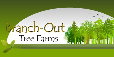 Branch-Out Tree Farms