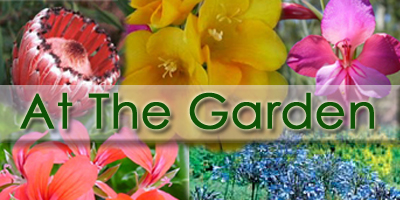 At The Garden - Nursery
